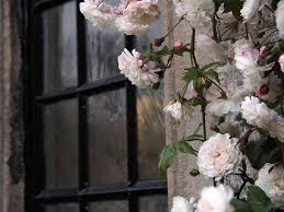 Rambling Roses And Climbing Roses What S The Difference Saga
