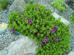 pick these showy perennials for low
