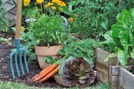 a beginner s guide to starting a garden