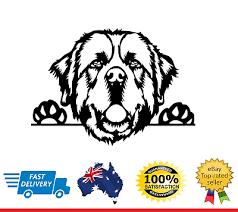 St Bernard Peeking Dog Car Decal Vinyl Sticker Ebay