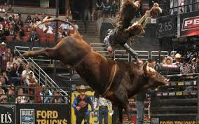 bull riding wallpapers hd bination