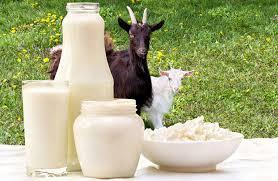 homemade goat milk formula recipe see