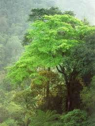 quotes about rain forests