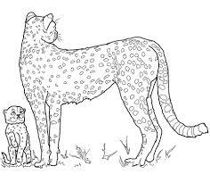 Baby Cheeta En Moeder Kleurplaat Gratis Kleurplaten Printen
