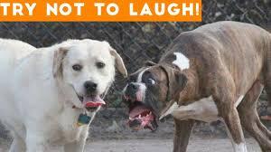 راقب الأفضل أحذية مزاجه فيديو كلاب مضحكة Taskinlardogaldepo Com