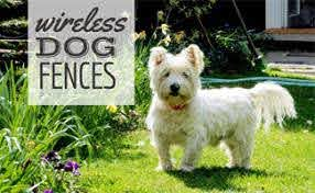 How Wireless Dog Fences Can Help You Put Up Boundaries Caninejournal Com
