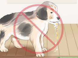how to get rid of tapeworms in a puppy