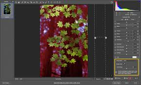 make local adjustments in adobe camera raw