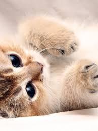 768x1024 kitten cute paws ipad wallpaper