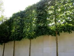 Can Trees Reduce Noise Pollution Perfect Plants
