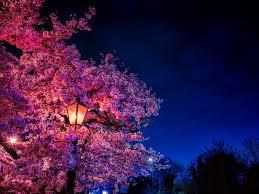اجمل صور ورد و خلفيات ورود جميلة جدا Hd اجمل بوكيه ورد احمر رومانسي