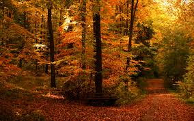 free autumn wallpapers for desktop