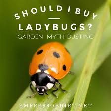 should i ladybugs for my garden