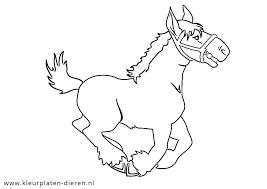 Paard Kleurplaten Dierenkleurplaten Dieren