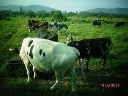 Uganda Cogent Breeding - Posts | Facebook