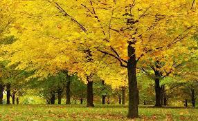 الأشجار المذهذة بجمالها خلفية أشجار طبيعية صباح الورد
