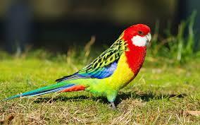 أجمل صور وخلفيات طيور ببغاء عالية الجودة Hd عالم الصور