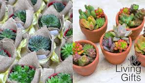 Where To Buy Succulents In The Philippines 19 Shops You Should Know