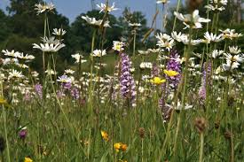 how to grow a wildflower meadow the