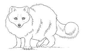 baby artic fox coloring pages best
