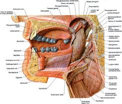 cavity oncohema key
