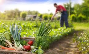 5 técnicas de cultivo utilizadas en la agricultura ecológica ...
