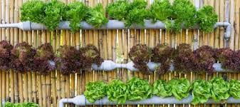 vegetables for vertical gardens