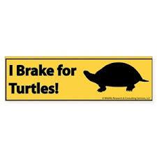 I Brake For Turtles Bumper Stickers Cafepress