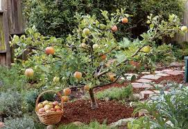fruit trees with this pruning method