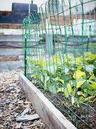 My Favorite Fences To Keep Out Critters Caterpillars And Birds No Diy Needed Garden Betty