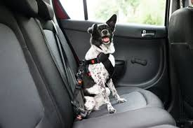 the 25 best dog seat belts of 2020