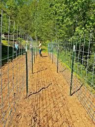 Our New Cattle Panel Bean Trellis Blind Pig And The Acorn