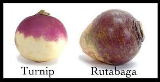rutabaga vs potato who will win