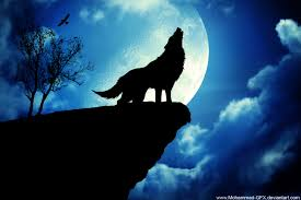 cool wolf backgrounds on wallpaperget