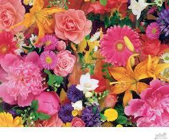 زهور صور زهور Amazing Flowers Pictures أشكال أزهار أجمل
