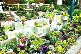 succulents garden designs allknown info