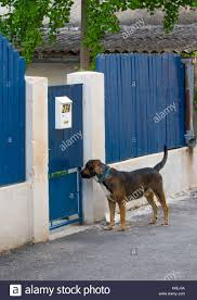 Dog Standing Outside Door Fence And Wating Stock Photo Alamy