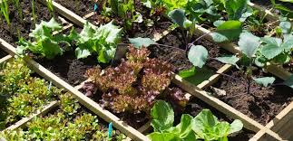 square foot gardening how to plan your