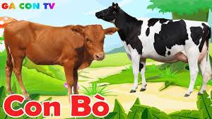 Con Bò 🐄 Lời bài hát, hình ảnh con bò vàng, bò sữa đang gặm cỏ ...