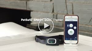 Dog Training Goes Digital New Remote Training Collar And App Allows Pet Parents To Use Smartphone To Train Their Dog