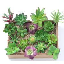 artificial miniature plants succulents