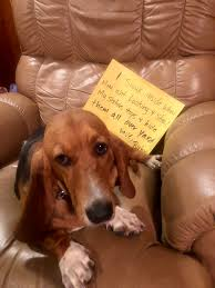 Basset Hound Archives - Dogshaming