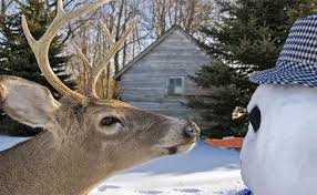17 solutions to keep deer off your property