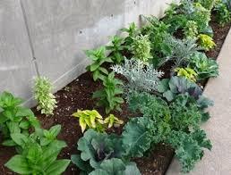 design a beautiful vegetable garden