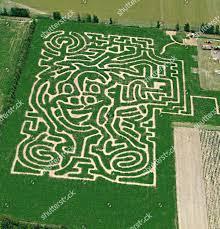 Strawberry face maize maze near Havant Hampshire Editorial Stock Photo -  Stock Image | Shutterstock