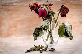 tips merawat bunga agar tidak layu seni