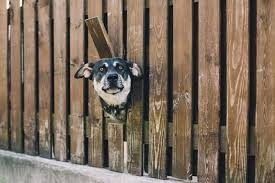 The 25 Best Pet Fences Of 2020 Findhow