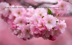 god cherry blossom flower images bible quotes