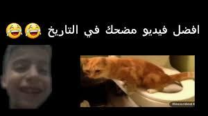 فيديو مضحكة عن القطط لم يسبق له مثيل الصور Tier3 Xyz