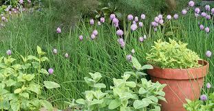 perennial garden edibles should i plant